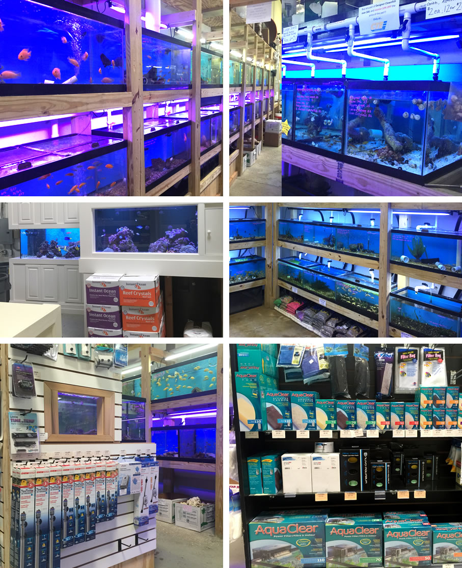 Cte aquatics a baltimore tropical fish store marine for Salt water fish store